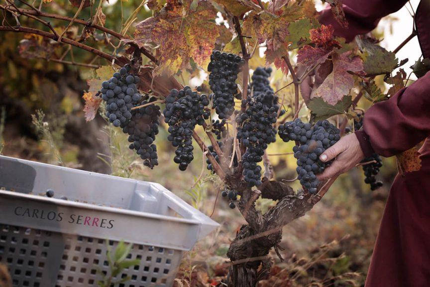 Los viñedos de Carlos Serres