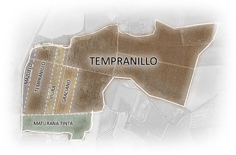 Mapa Vinedos Carlos Serres
