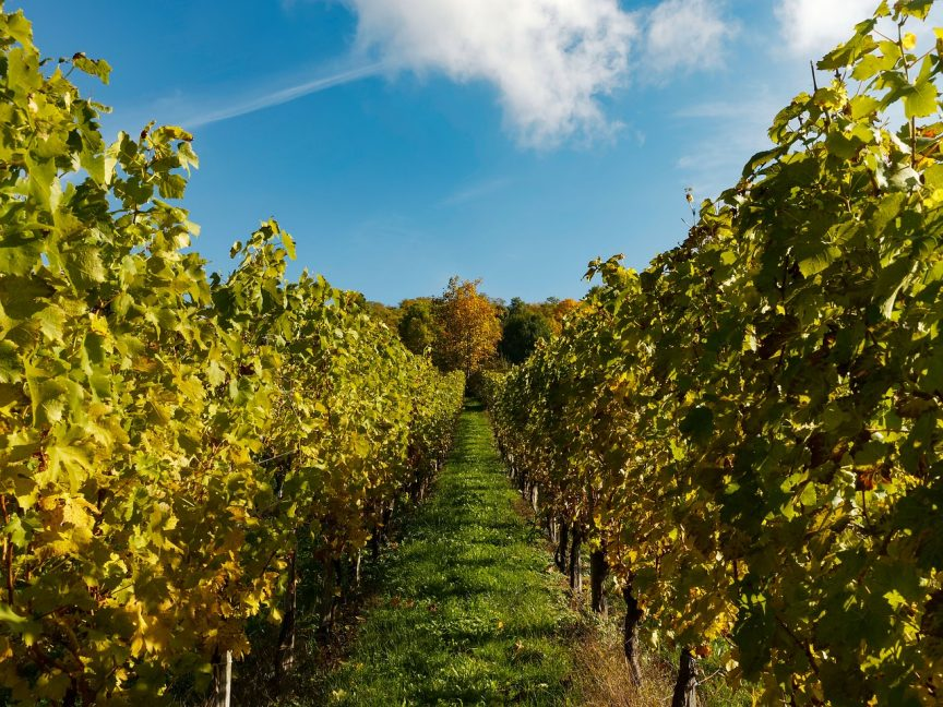Regiones vitivinícolas en España