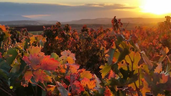 Producción de vino en España - La Rioja