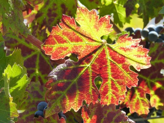 Producción de vino en España - Priorat