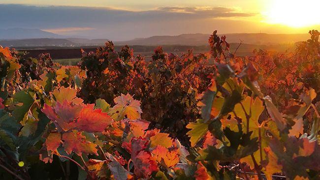 Regiones vitivinícolas de España