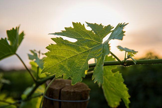 Regiones vitivinícolas de Francia