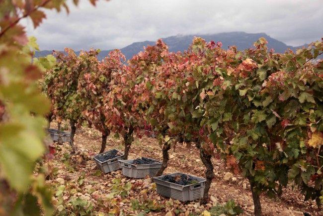 Características de los vinos de finca