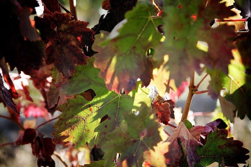 Influencia del clima en el vino