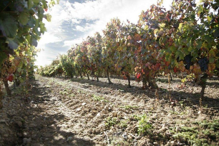 La importancia del terruño en el vino