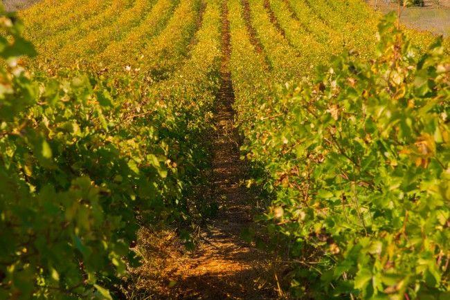 Viñedos La Rioja