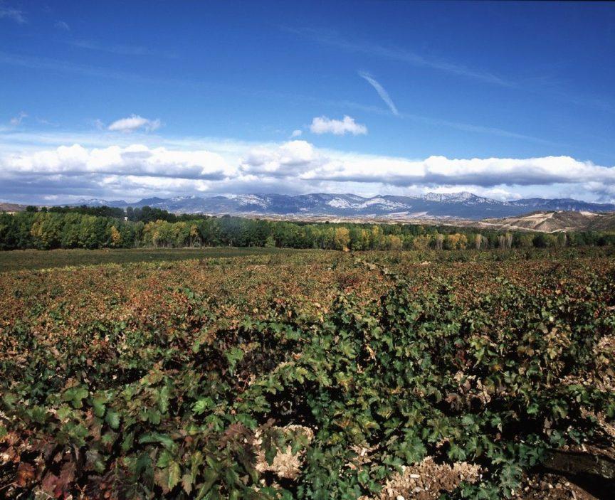 Haro, referente del vino español
