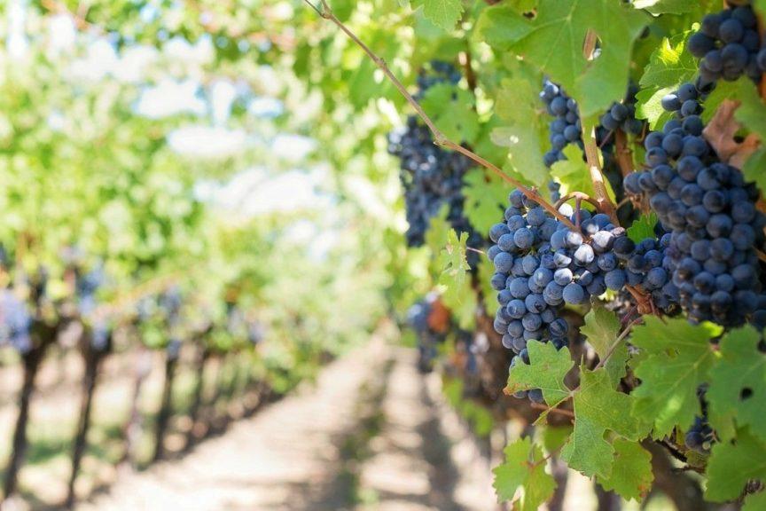 ¿Qué es un vino afrutado?