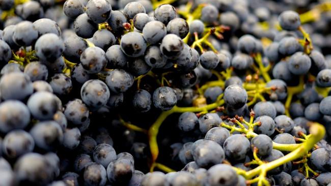 Tipos de uvas para vinos afrutados