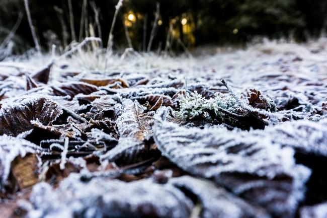 Nieve en el viñedo
