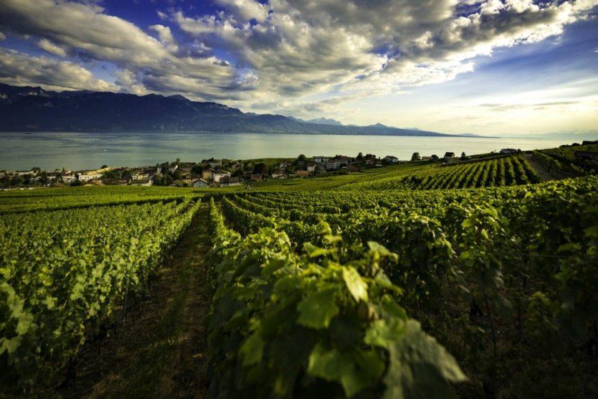 El uso de drones en viticultura