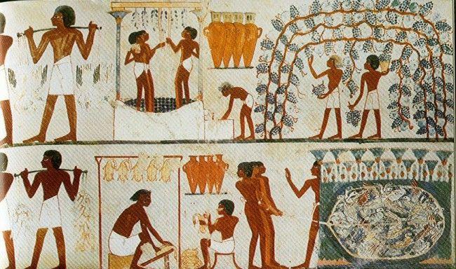 Cultivo de la vid en Egipto