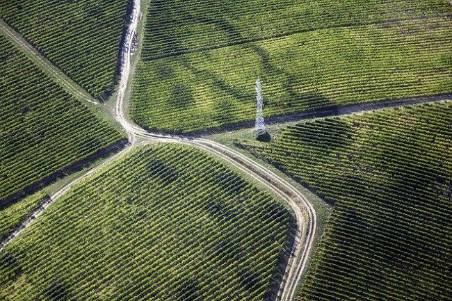 Ventajas del uso de drones en viticultura