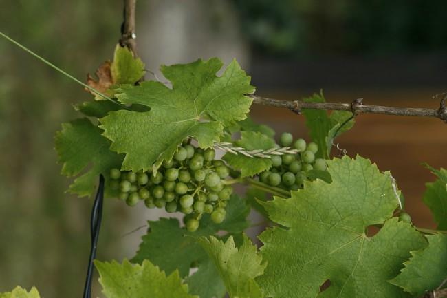 Regiones vinícolas de América