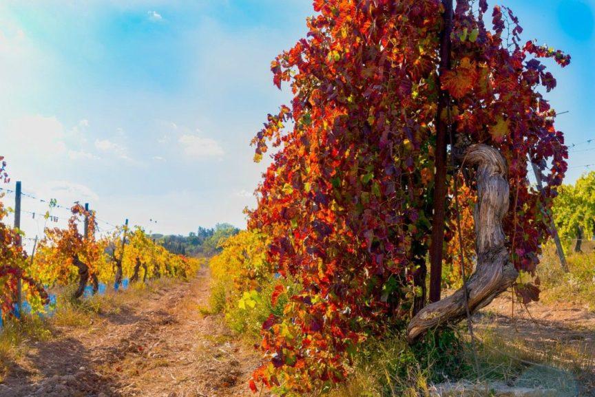 Los colores del viñedo