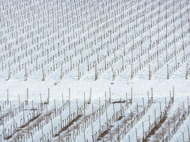 Beneficios de la nieve para los viñedos