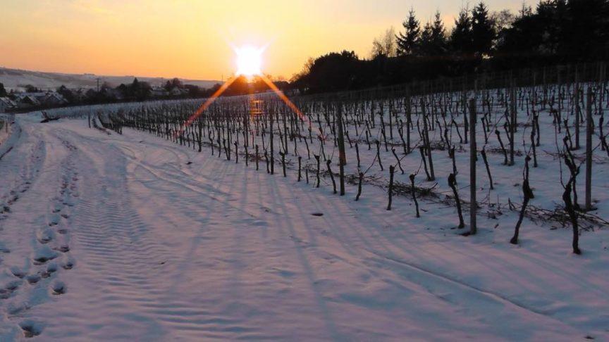 Los efectos de la nieve en el vino