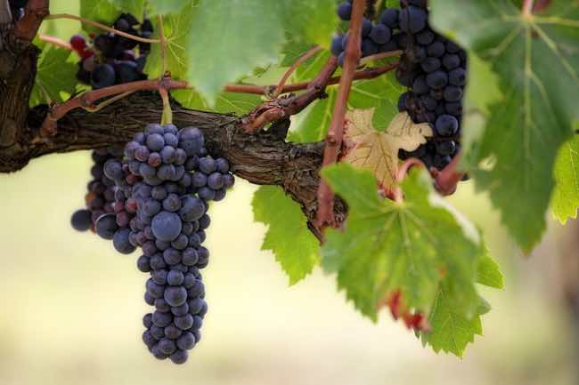 La importancia de los tartratos en el vino