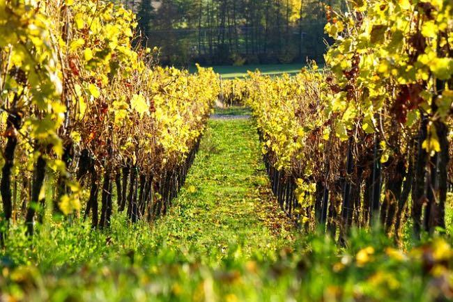 En qué países de consume más vino