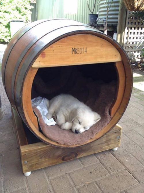 Reciclar barricas de vino como casa para mascotas