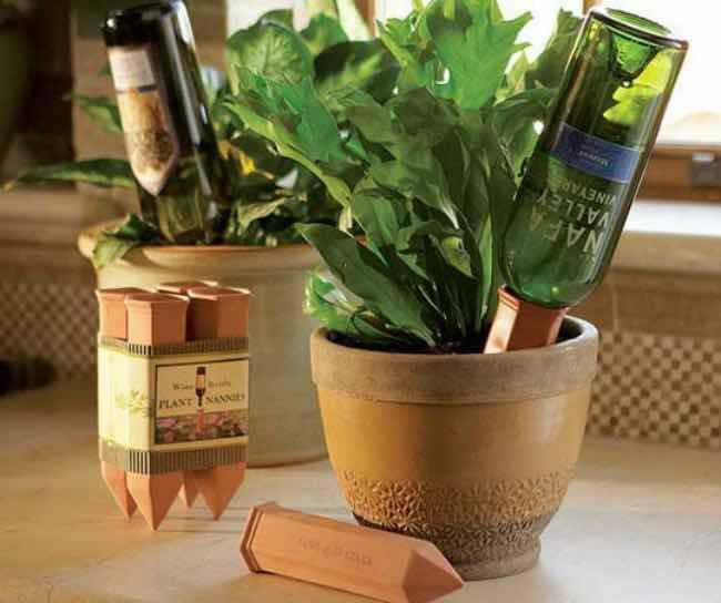 Reciclar botellas de vino para regar plantas