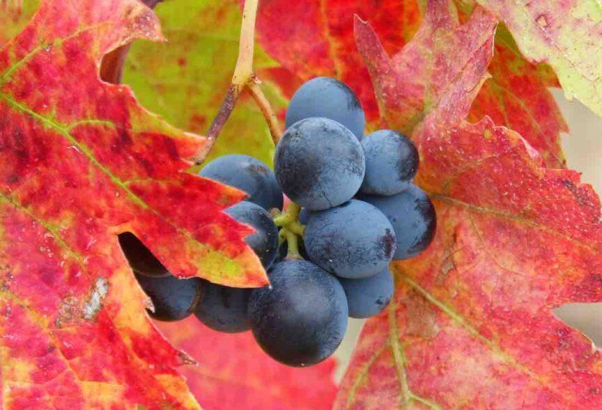 ¿Cómo afectan el clima y la geografía al vino?