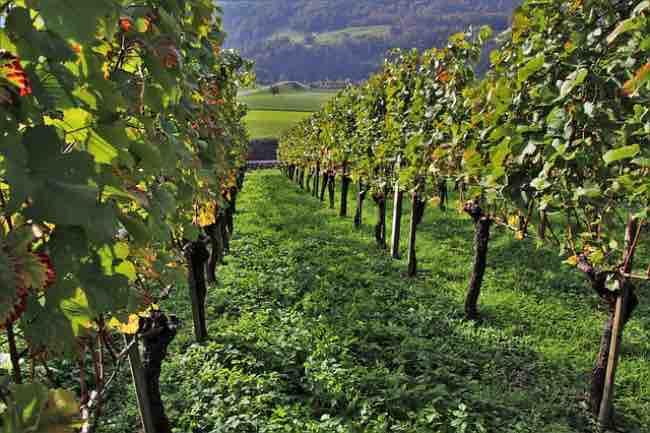 Cómo afecta el tipo de suelo al vino