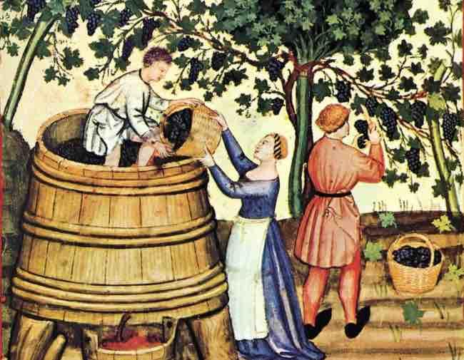 Modelo de producción del vino en la Edad Media