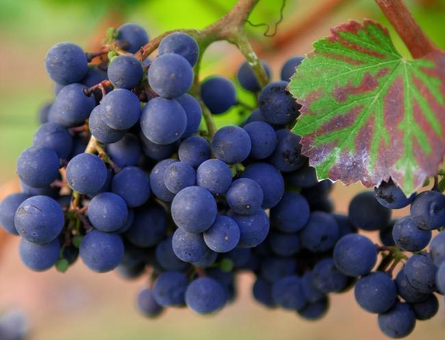 Vinos que usan hollejos de la uva