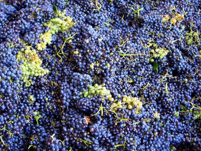 Identificar el hollejo de la uva