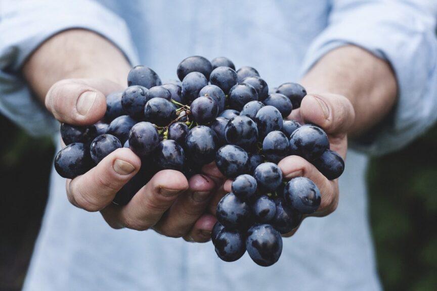 Qué es el hollejo de la uva