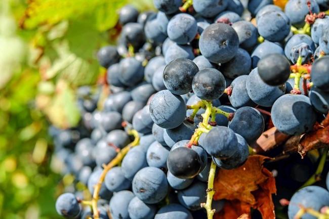 Tipos de azúcares en el vino