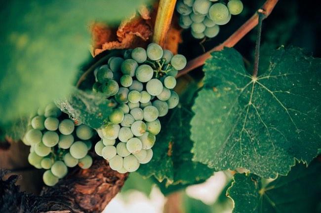Cómo se marca el precio de un vino