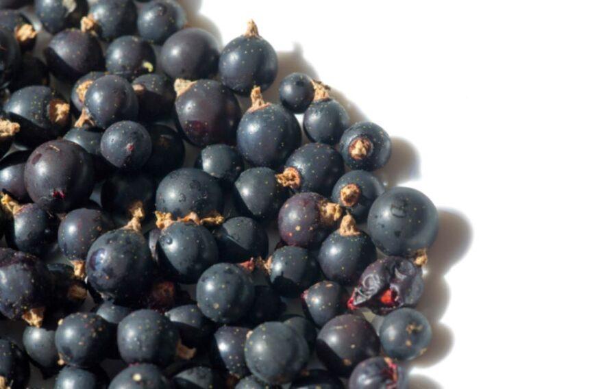 ¿Qué son los polifenoles del vino?