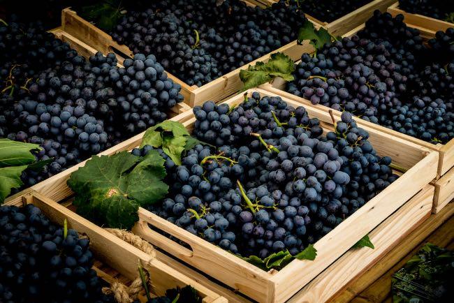 Características de los vinos con uva Graciano