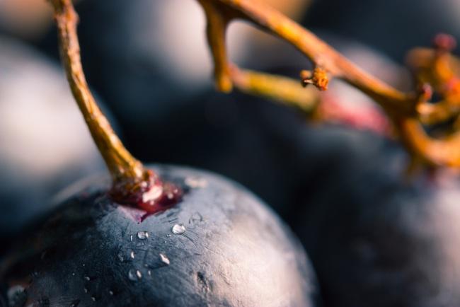 Características de uva Graciano