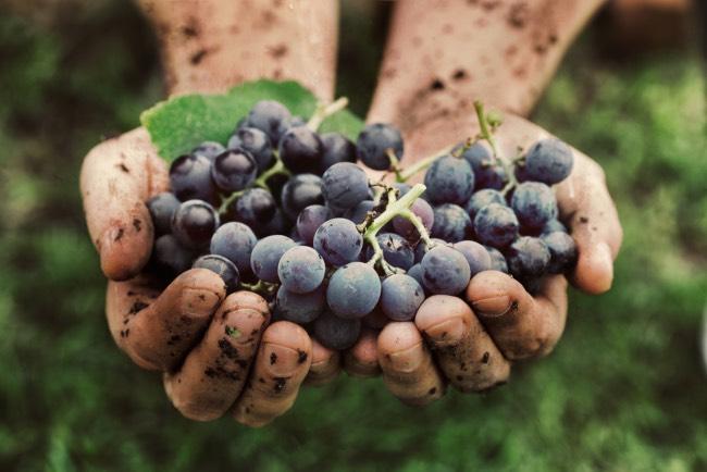 Cuándo es la vendimia en La Rioja