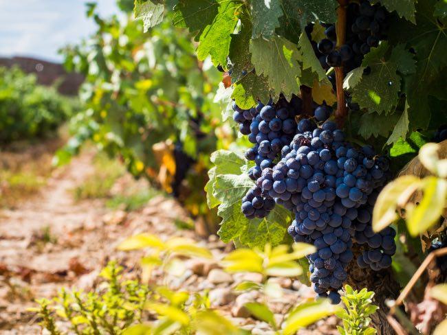 Guía rápida para maridar con vino tempranillo