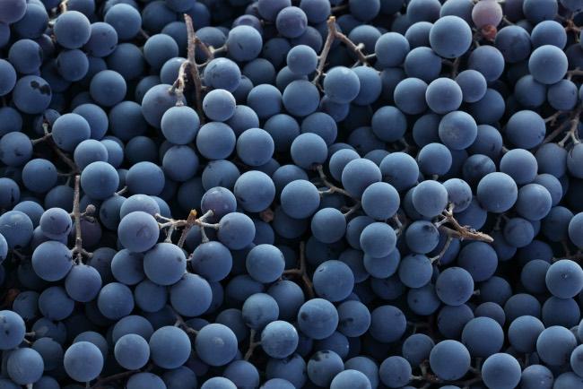 Importancia de las levaduras en el vino