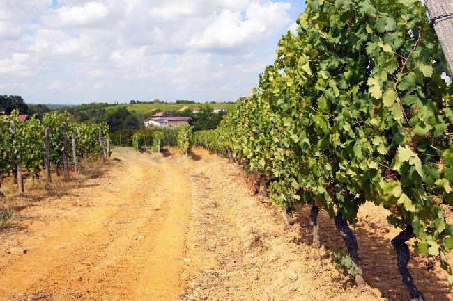 Características de un vino biodinámico