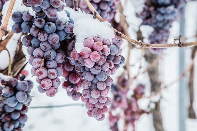 Características de los vinos de hielo