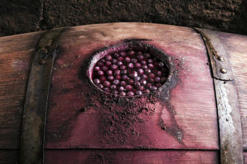 Curiosidades sobre la fermentación maloláctica
