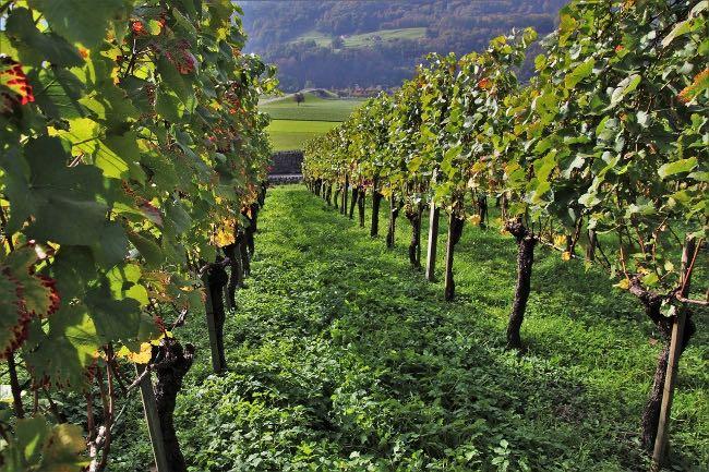 Cómo afecta el cambio climático a los viñedos españoles